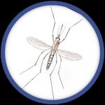 desinsectisation-moustique